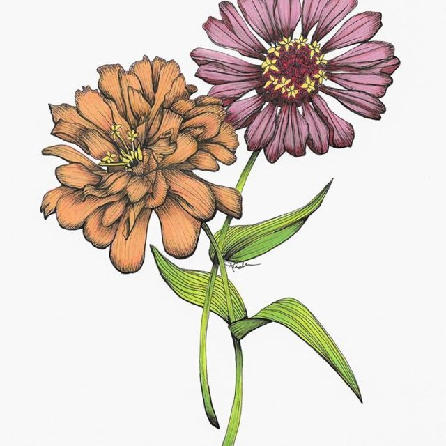 The zinnias all decked out with color Working on puttinghellip