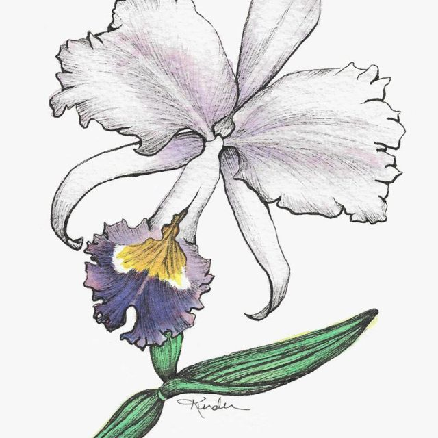 The finished orchid  flower dancer  Watercolor and Microns