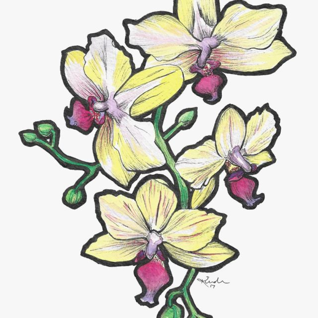 And the orchids with color! Reminds me of stained glass