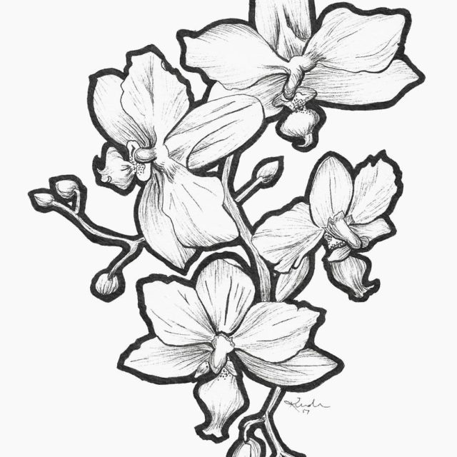 The linework for my latest orchids So many intricate shapeshellip