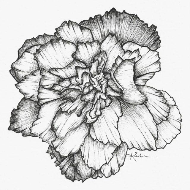 Inktober 1431 tuberous begonia blossom They remind me of roses