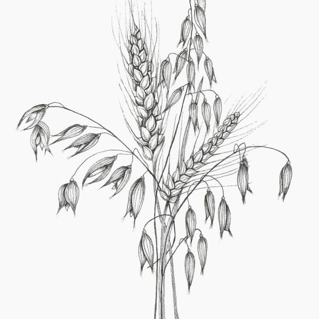 Inktober 1731 eat your Wheaties kids Who knew oatmeal washellip